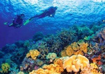 Membanggakan, Wisata Indonesia Sabet Dua Juara dari Dive Magazine