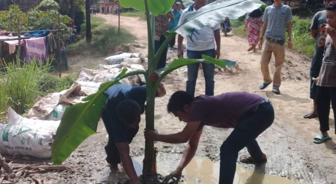 Tak Kunjung di Bangun,Warga Desa Parimburan Tanam Pohon Pisang di Badan Jalan