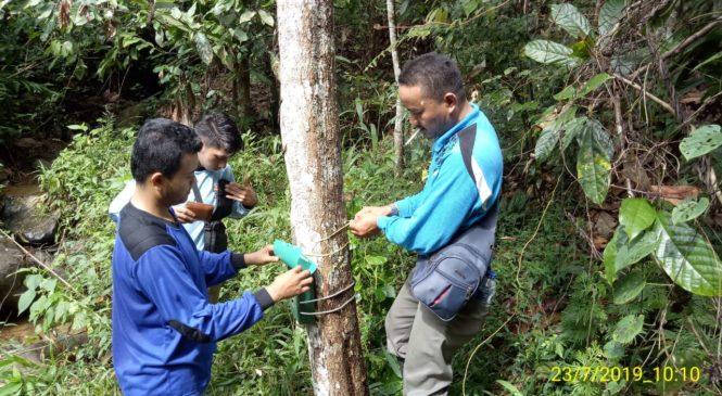 Harimau Sumatera Resahkan Warga Aia Manggih